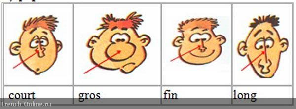 формы носа на французском языке