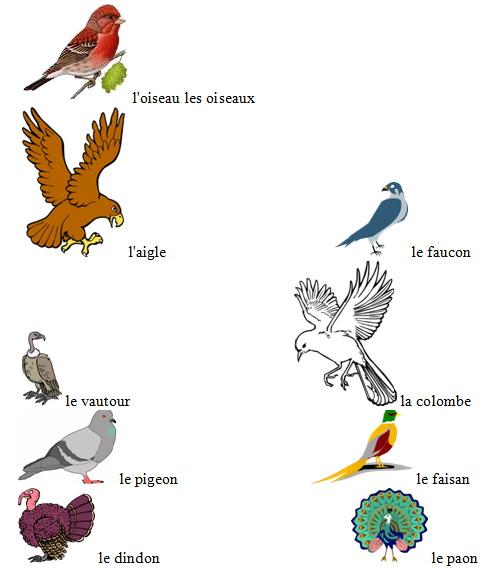 Птицы на французском языке