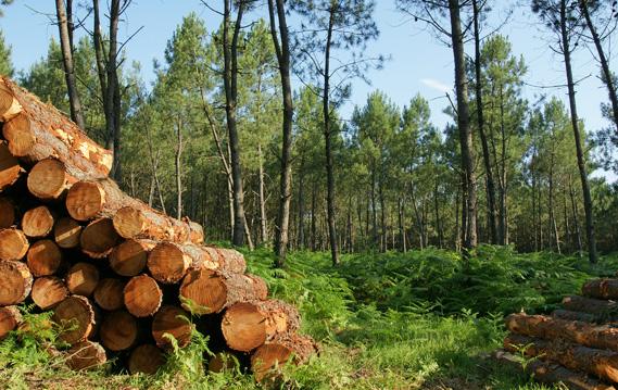 forestiere