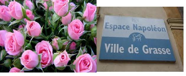 expo roza