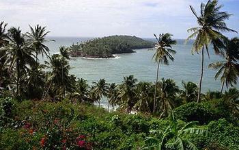 зеленых экваториальных лесов